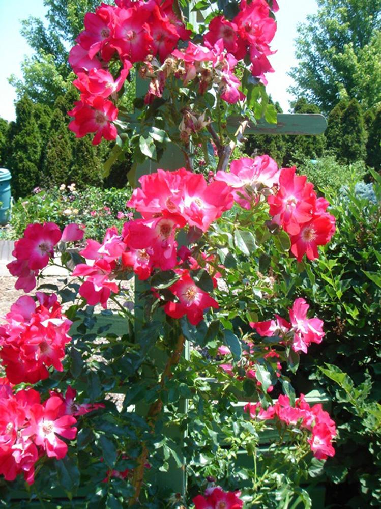 flowers-from-bhg-garden-kb.jpg